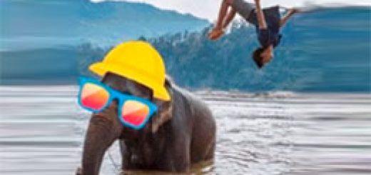 слон от Твиттер